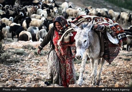کوچ عشایر قشقایی