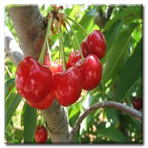 میوه ای مفید برای سلامت قلب و عروق