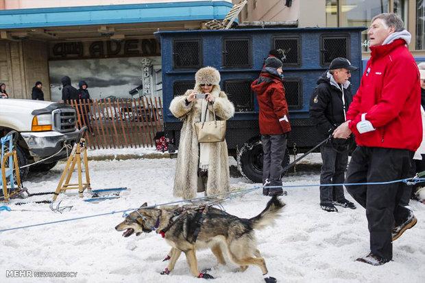 اخبارگوناگون,خبرهای گوناگون,سگ سورتمه