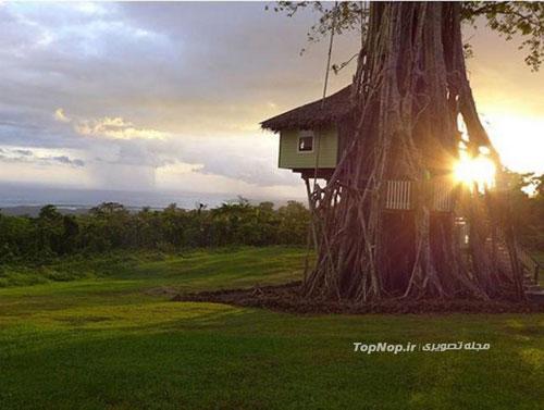 یك اقامتگاه تفریحی بر روی درخت