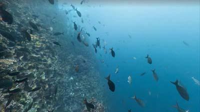 اخبار,اخبار گوناگون,تصاویر زیبا استریت ویو گوگل از اعماق اقیانوس