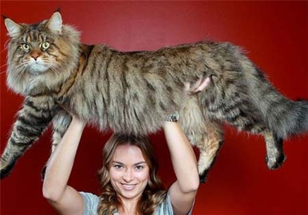 اخبار , اخبار گوناگون ,بزرگترین حیوانات جهان,تصاویر بزرگترین حیوانات