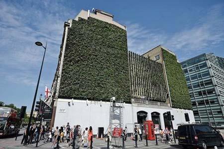 بزرگ ترین دیوار سبز لندن