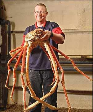 بزرگترین خرچنگ