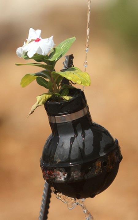 استفاده بهینه از گلوله گاز اشک آور از سوی یک خانواده فلسطینی به عنوان گلدان