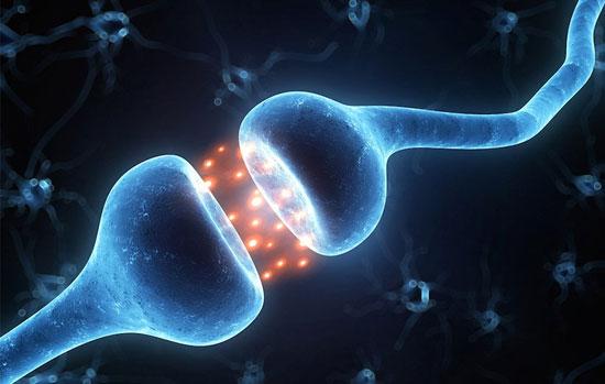 آلزایمر؛ نتیجهی اشتباه سیستم ایمنی در نابودی ارتباطات عصبی