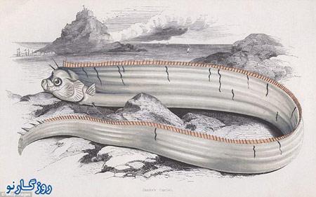 اندازه بزرگترین ماهی دنیا , تصاویر بزرگترین ماهی
