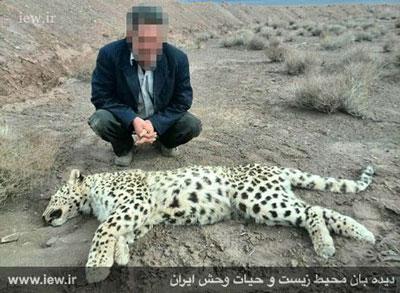 اخبار,اخباراجتماعی ,مرگ چهارمین پلنگ ایرانی