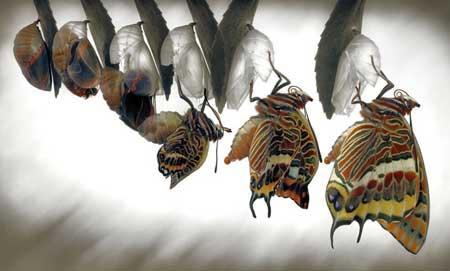 دگردیسی پروانه ها ، منطقه Calonge در شمال شرق اسپانیا