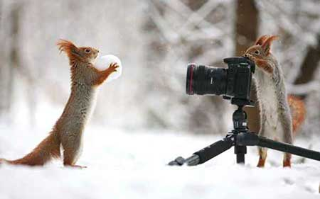عکسهای جالب,سنجاب,تصاویر دیدنی