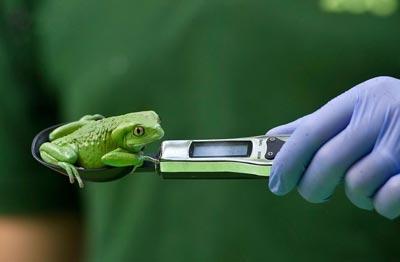 وزن کشی حیوانات در باغ وحش,اندازه گیری وزن حیوانات در باغ وحش,باغ وحش لندن