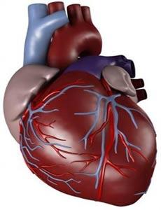 گیاه درمانی در بیماری های قلبی عروقی