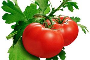 گوجه فرنگی,فواید آب گوجه فرنگی,خواص گوجه فرنگی
