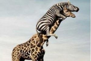 فهرستی از عجیبترین حیوانات جهان!