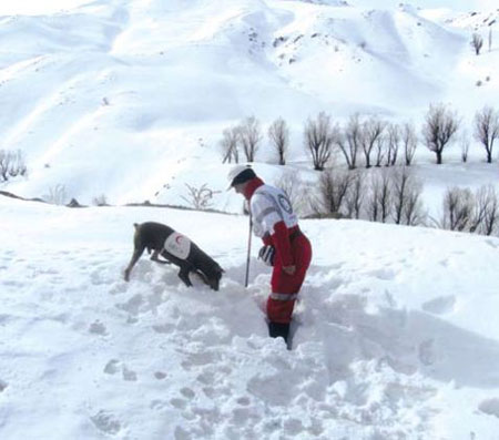 دکتر مجلسی از 9 سال عملیات زندگی بخش در کنار باهوشترین سگ تجسس هلال احمر