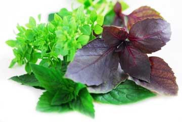 علت مسمومیت غذایی,راههای درمان مسمومیت غذایی