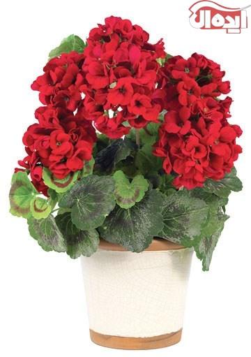 پیشنهاد آمادهسازی چند گلدان گل برای خانههای آپارتمانی در فصل بهار