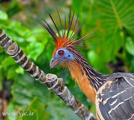 جالب ترین پرنده های رکورد شکن,اخبار,اخبار داغ