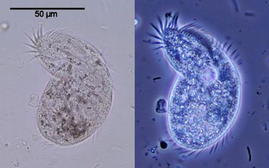 میکروسکوپ های نوری چگونه کار می کنند؟