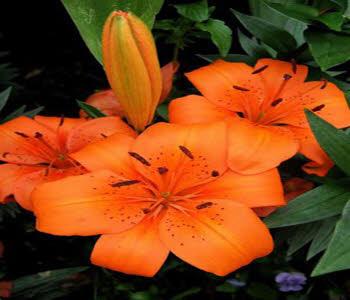 نگهداری گلهای تزئینی