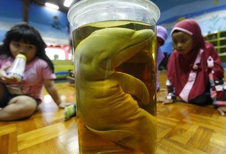 دانش آموزان اندونزیایی در موزه حیوان شناسی در جاکارتا