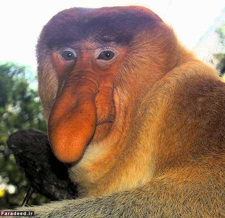 اخبار,اخبارگوناگون ,عجیبترین حیوانات جهان