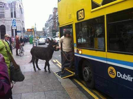 تصویر جنجال برانگیز ورود الاغ و صاحبش به اتوبوسی در ایرلند