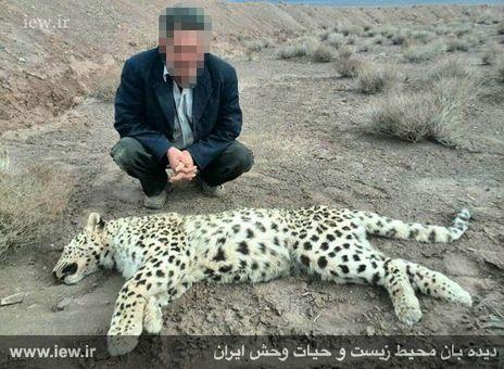 مرگ چهارمین پلنگ ایرانی در سال 94 +عکس