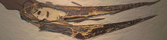 معروفترین دایناسورهای جهان: ترانادان