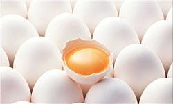 قیمت هر شانه تخممرغ ,قیمت کره