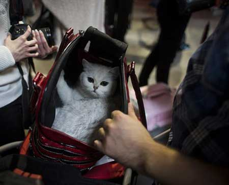عکسهای جالب,نمایش جهانی گربه ها,تصاویر دیدنی
