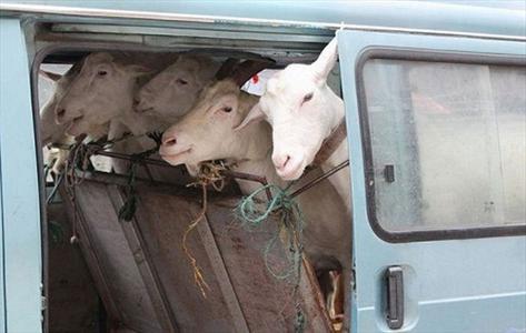 تصاویر: شیر از این تازهتر پیدا میشه؟!