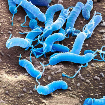 زخم های گوارشی, درمان بیماری, عفونت باکتریایی