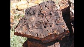 قدیمیترین فسیل جهان