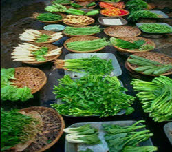 نگهداری سبزیجات