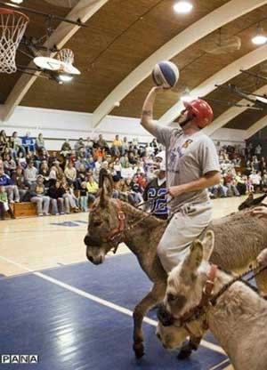 مسابقات بسکتبال با الاغ