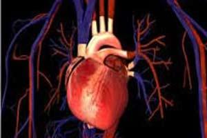 رابطه فعالیت جنسی و بیماری قلبی