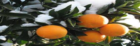 خواص داروئی میوه پرتقال