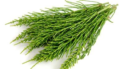 خواص درمانی گیاه دم اسبی,خاصیت درمانی دم اسبی,گیاه دم اسبی