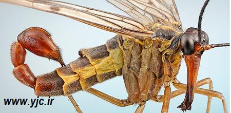 اخبار,حشرات خون آشام,حشرات فضایی