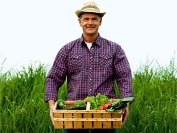 محصولات ارگانیک, مضرات کودهای شیمیایی