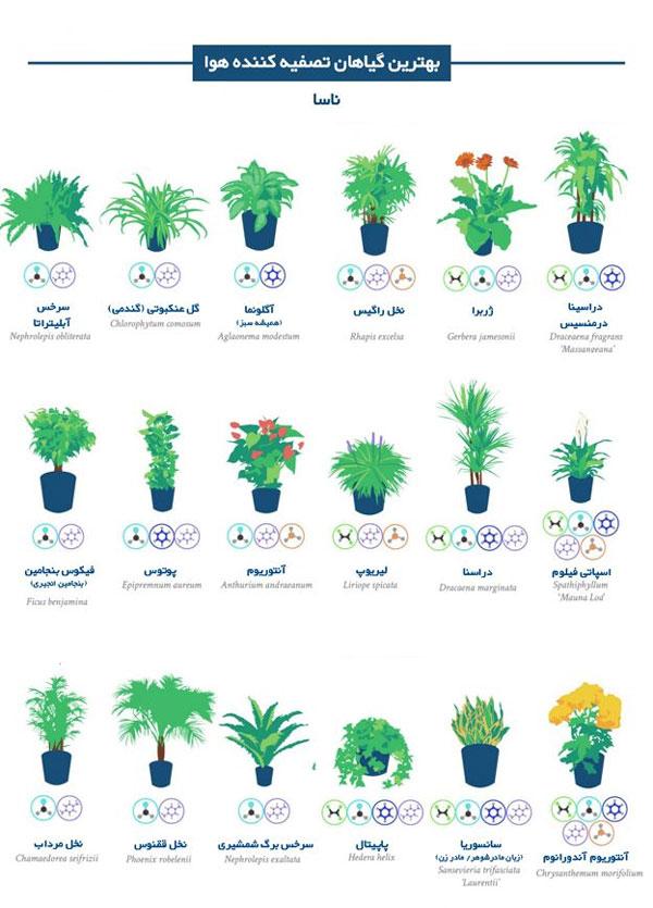 تصاویر/ بهترین گیاهان برای تصفیه هوای خانه و اداره از نگاه ناسا