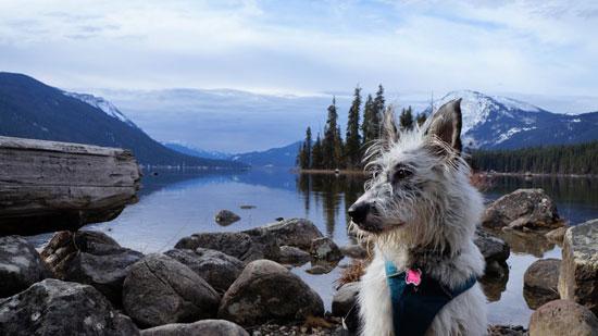 چگونه سگ ها بدون جی پی اس مسیریابی میکنند؟