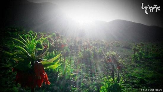 زیباییهای ایران: استان کهگیلویه و بویراحمد
