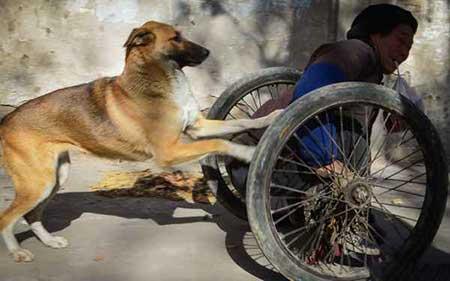 عکسهای جالب,سگ وفادار,عکسهای جذاب