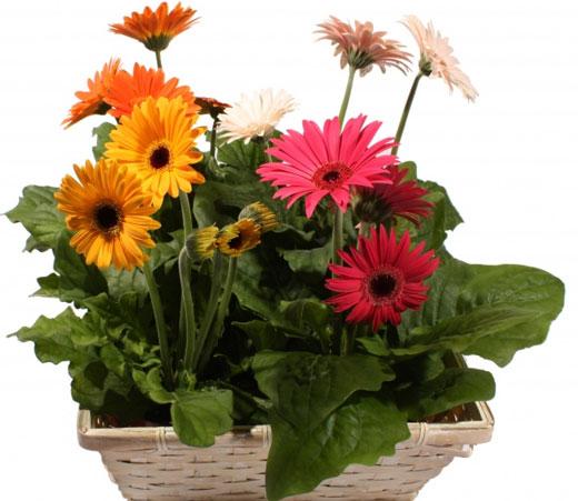 با این گیاهان آلودگی ها و سموم خانه را از بین ببرید