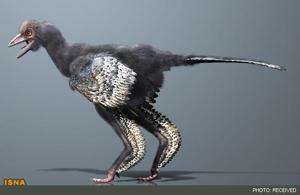 قدیمی ترین پرنده جهان