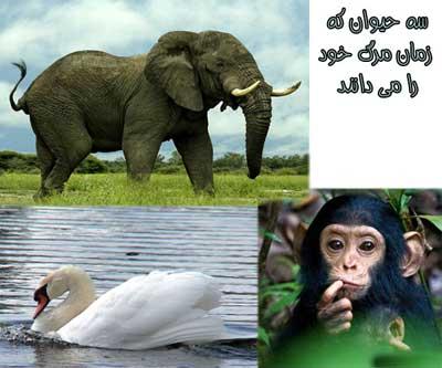 درباره حیوانات ,عکس قو