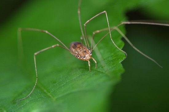 رازهایی از دنیای شگفت انگیز عنکبوت ها